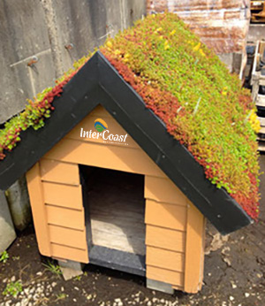 Sprucing up the ol' Dog House with a New Hydrotech Green Roof