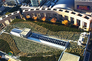 Green Roofs - More than just a Pretty Roof Garden!