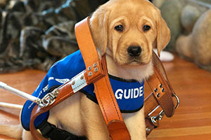 InterCoast Building Solutions is delighted to be a sponsor for the 19th annual Golf for Guide Dogs Event